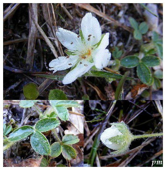 Petite Flore A L Usage Des Promeneurs Des Pistes Et Chemins